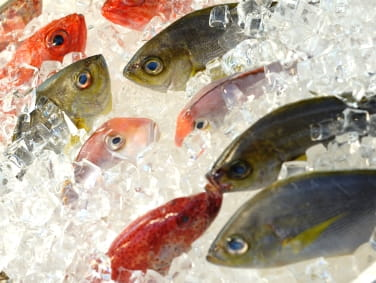 Food Poisoning from Fish: Ciguatera and Scombroid