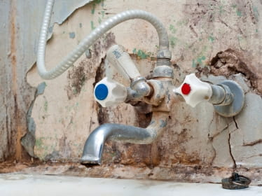 mold - Exposure To Black Mold
