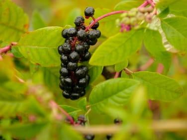 Where To Plant Blackberry Bushes