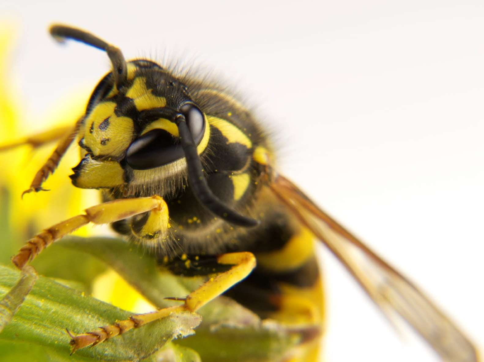 Bee Stings: Is It an Allergic Reaction?