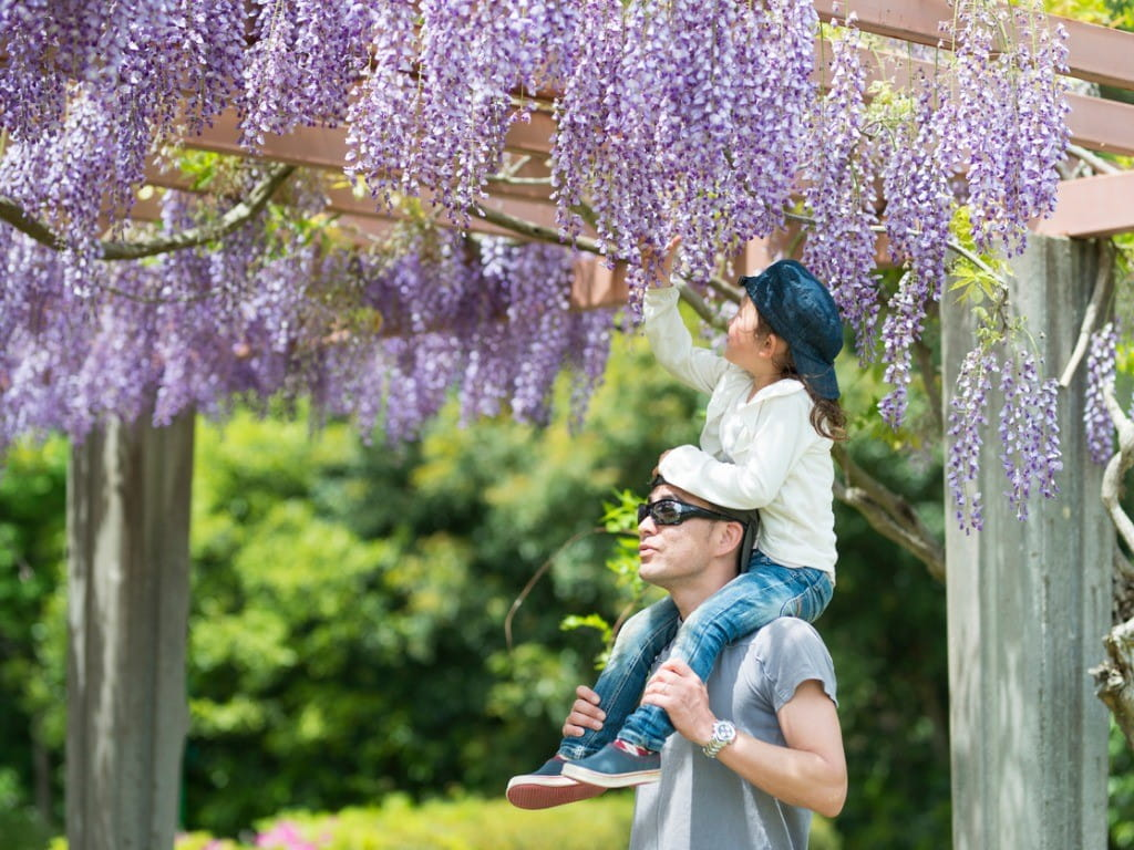 father and daughter looking at wisteria vines